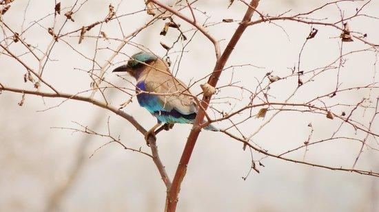 Kaziranga National Park : Roulier