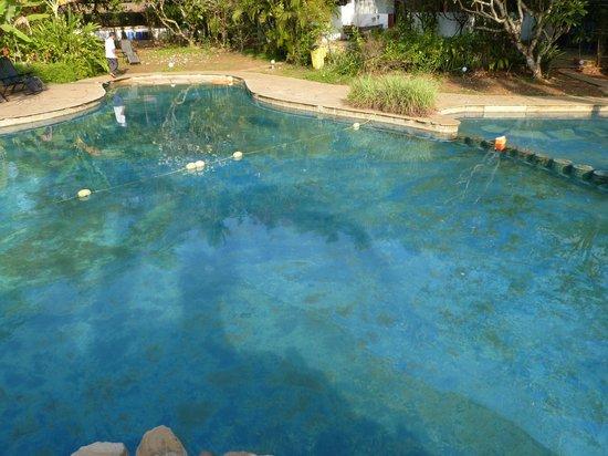 Laguna Anjuna: algues piscine