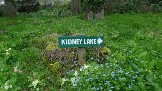 Hoveton Hall Gardens: Kidney Lake