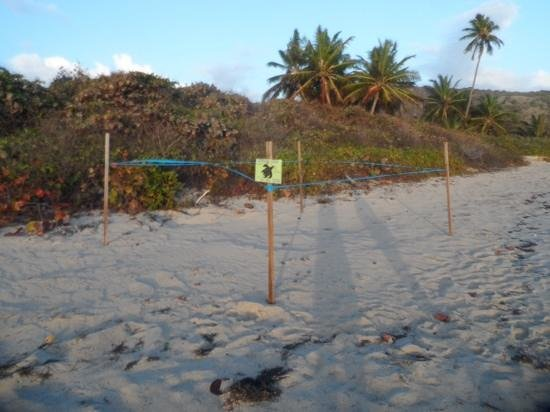 Zoni Beach: sea turtle nesting site at Zoni