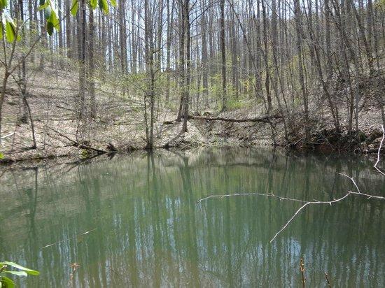 Balsam Mountain Inn & Restaurant: A pond below the hill