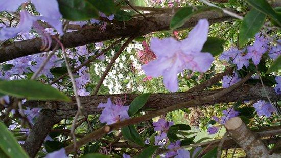 Bodnant Garden: amazing colours