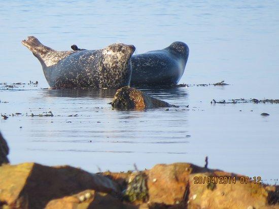 Best Western Kinloch Hotel : SEALS ON LOCAL BEACH