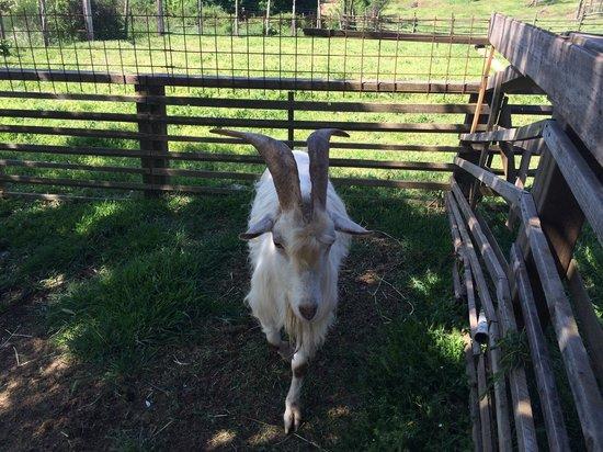 Agriturismo L'Introvabile: Pecorella
