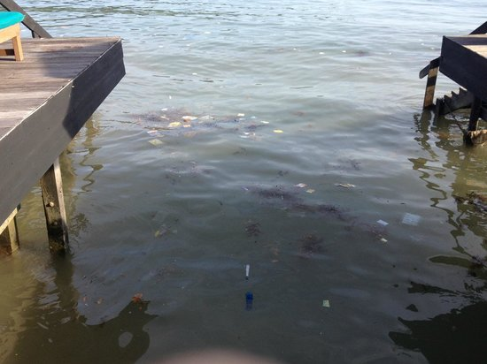 Gayana Marine Resort: dirty sea