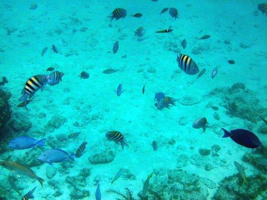 Fat Fish Adventures: Barrier Reef!