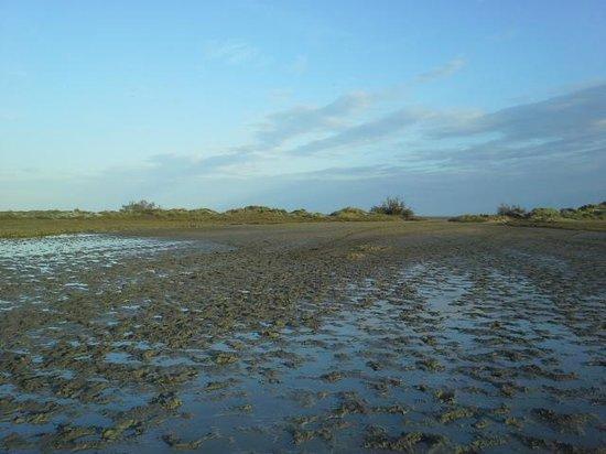 Centre Équestre les Arnelles en Camargue : premier petit galop dans les marais