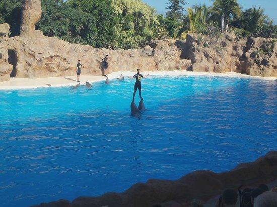 Loro Parque: Дельфин шоу
