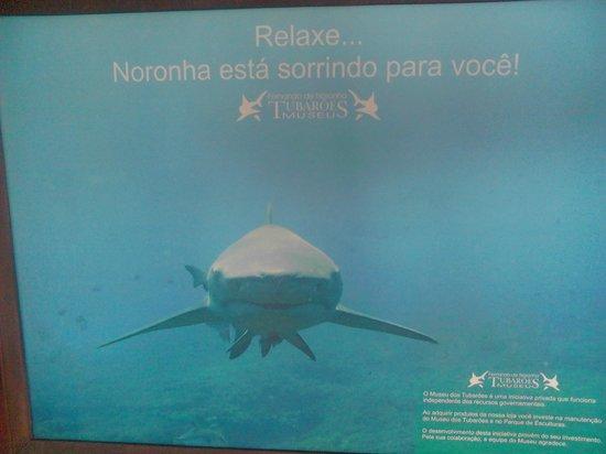 Museu do Tubarão: Noronha está sorrindo!