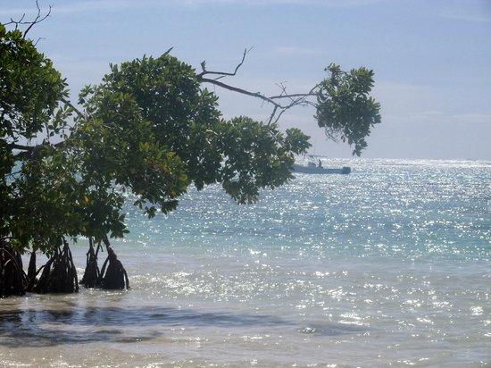 Puntacana Ecotours: The Sea