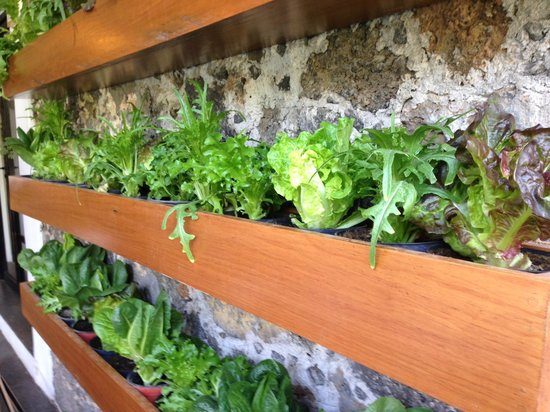Casa Fernanda Hotel Boutique: Lettuce grown in the restaurant :)