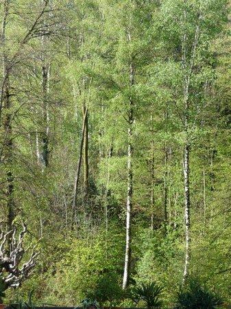 Hotel & Spa Cacciatori : Blick vom Zimmer aus in den Frühlingsbirkenwald