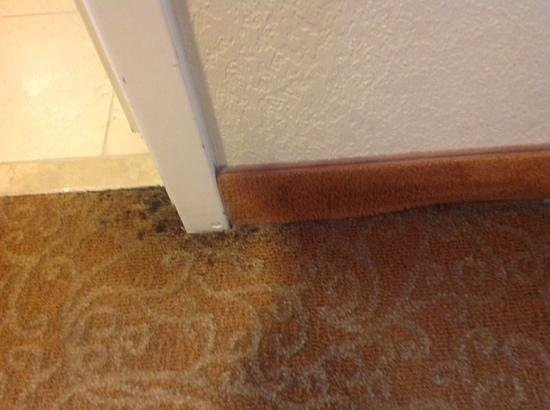 Crowne Plaza Hotel Astor-New Orleans: mold