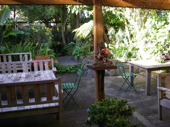Brown Kiwi Backpacker Hostel: sunny private garden and barbeque area