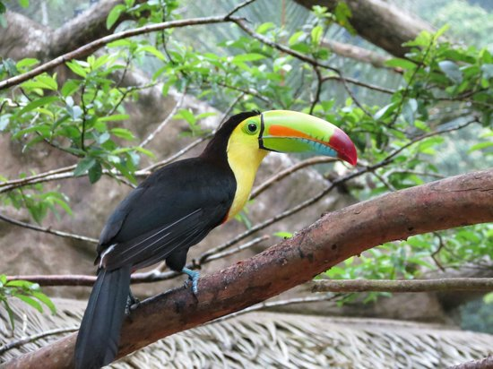 The Springs Resort and Spa: Enclos des toucans