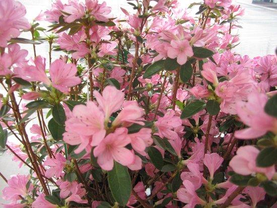 NH Luxembourg: Просто цветы.Продавали на остановке.