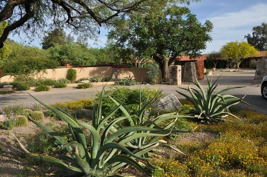 The Inns at El Rancho Merlita: The landscaping is beautiful!