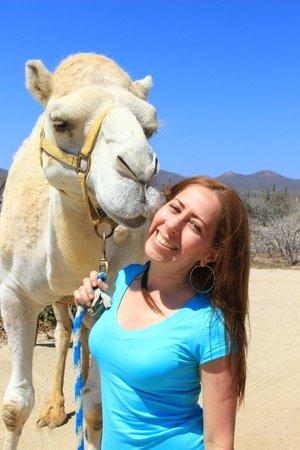 Cabo Adventures: Camel Safari in Cabo San Lucas