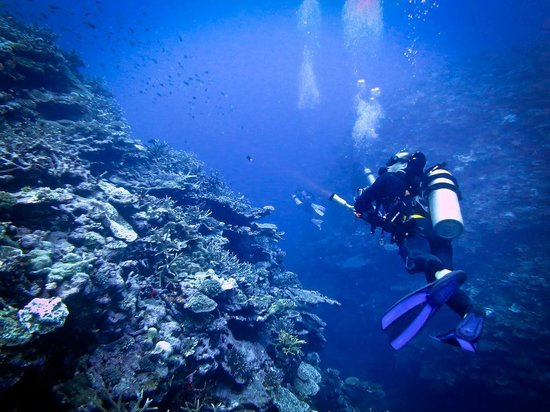 Mai Dive - Astrolabe Reef Resort: Mai Dive - Astrolabe Reef