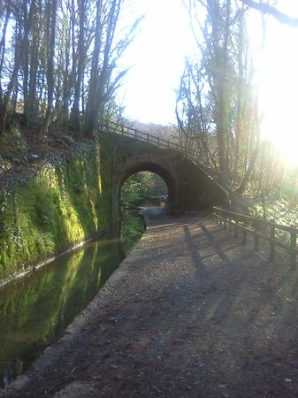 Plym Valley Cycle Trail: Cycle alongside the old canal path...