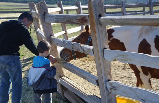 Zion Mountain Ranch: Feeding one of the horses