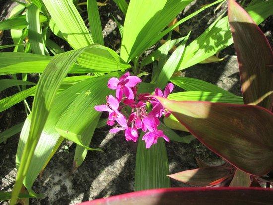 Collins Hotel: Flores do jardim do hotel