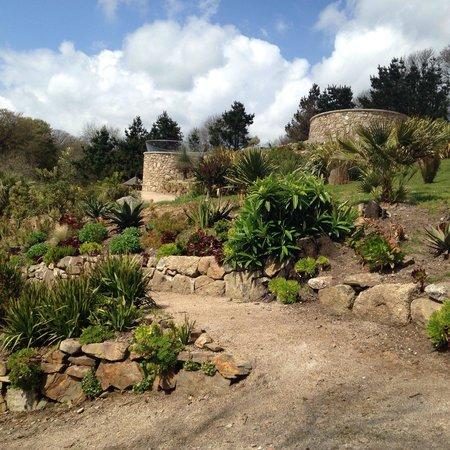 Tremenheere Sculpture Gardens: Interesting planting