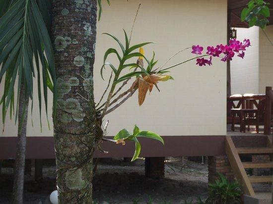 Phi Phi Villa Resort: Flowers outside one of the villas