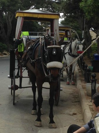Qawra Point Holiday Complex: Horse rides around Silent City Mdina