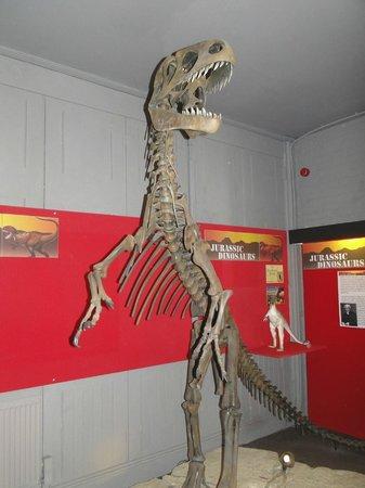 The Dinosaur Museum : great entrance piece