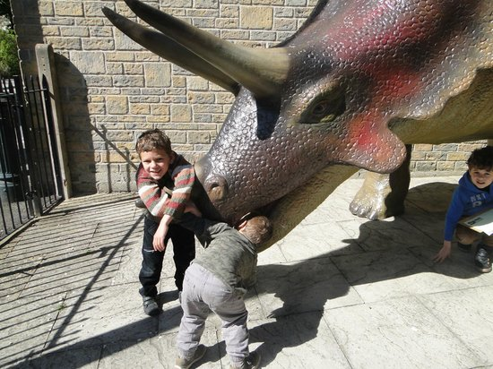 The Dinosaur Museum : they loved the dinosaur models