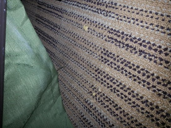 Extended Stay America - Edison - Raritan Center: food crumbles on carpet