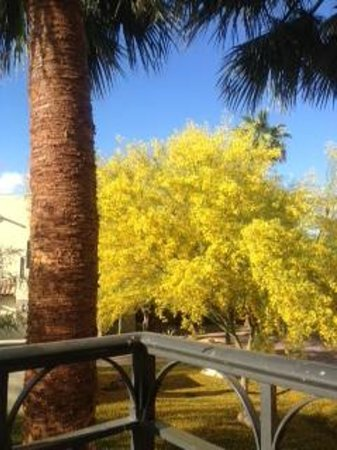 Fairmont Scottsdale Princess : Parrots in our Trees!