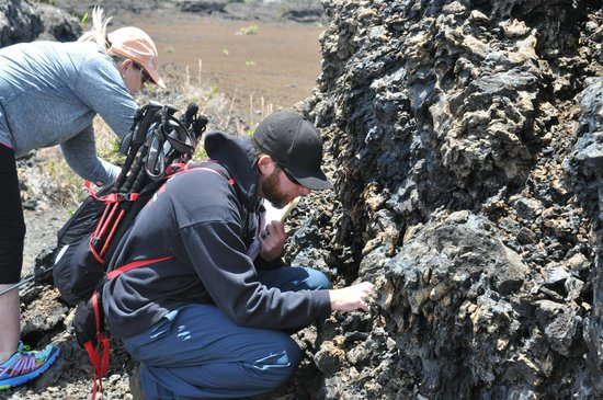 VolcanoDiscovery Hawai'i : Hands on these guys