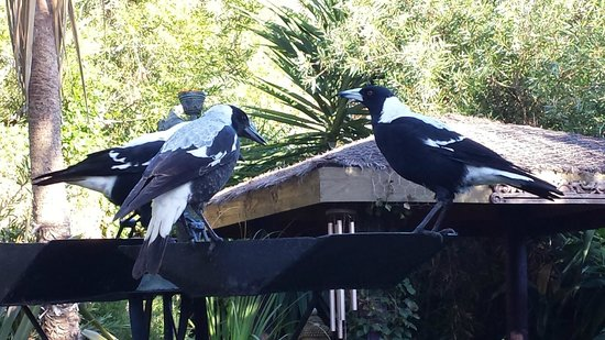 Seas The Day B&B: magpies are frequent garden visitors