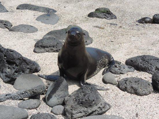 Las Loberias: lobo marino