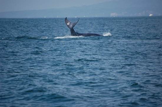 Puerto Vallarta Tours: A mother whale teaching her baby to use flippers!