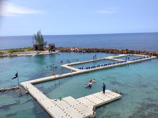 Dolphin Cove: Dolphin swim area