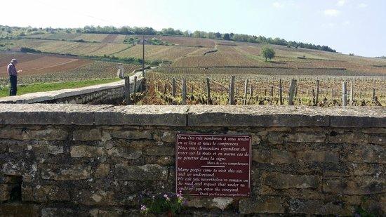 Authentica Tours : Romanee-Conti Grand Cru Vineyard - the goldmine