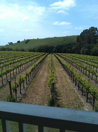 A Limo Excursion & Wine Tours: Napa Valley