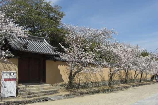Horyuji Temple: 法隆寺の桜路