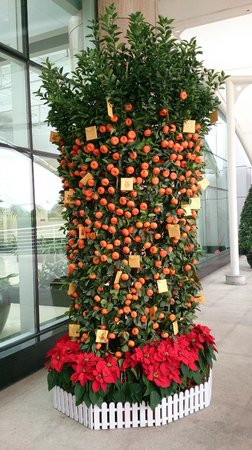 Pullman Guangzhou Baiyun Airport: Cumquat decorations for Chinese new year