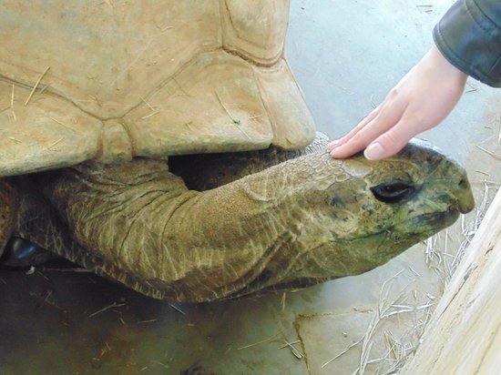 Reptile Gardens : Petting one of their giant tortoises