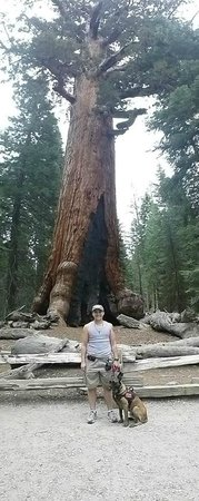 Mariposa Grove of Giant Sequoias: Service Dogs in Mariposa Grove