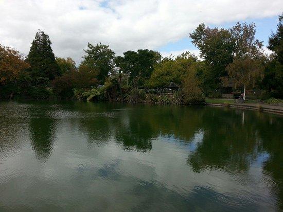 Kuirau Park: Vista de un lago en el parque