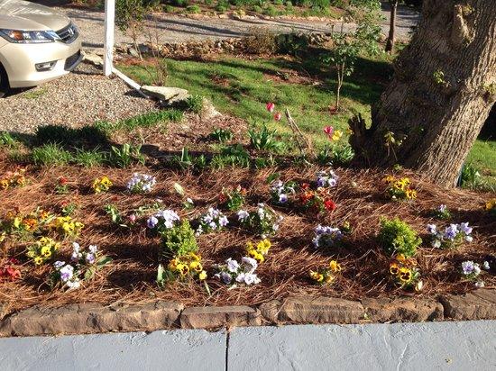 Biltmore Village Inn : Landscaping