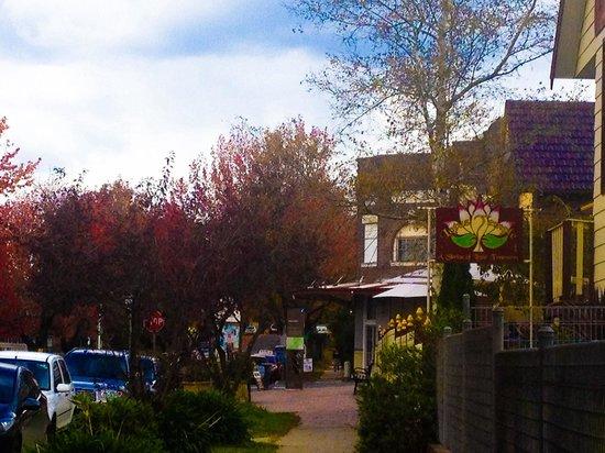 Govetts Leap : Autumn in blue mountains town Blackheath near Lotus Temple...