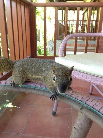 Padma Resort Legian: バルコニーにみかんの皮を置いていたら遊びにきたリス