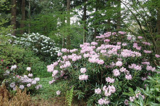 Incroyable Rhododendron Species Botanical Garden