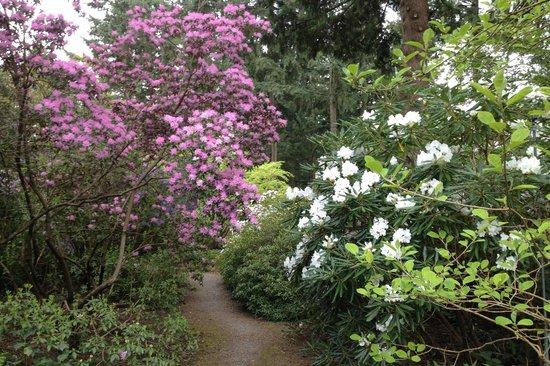 Superbe Rhododendron Species Botanical Garden